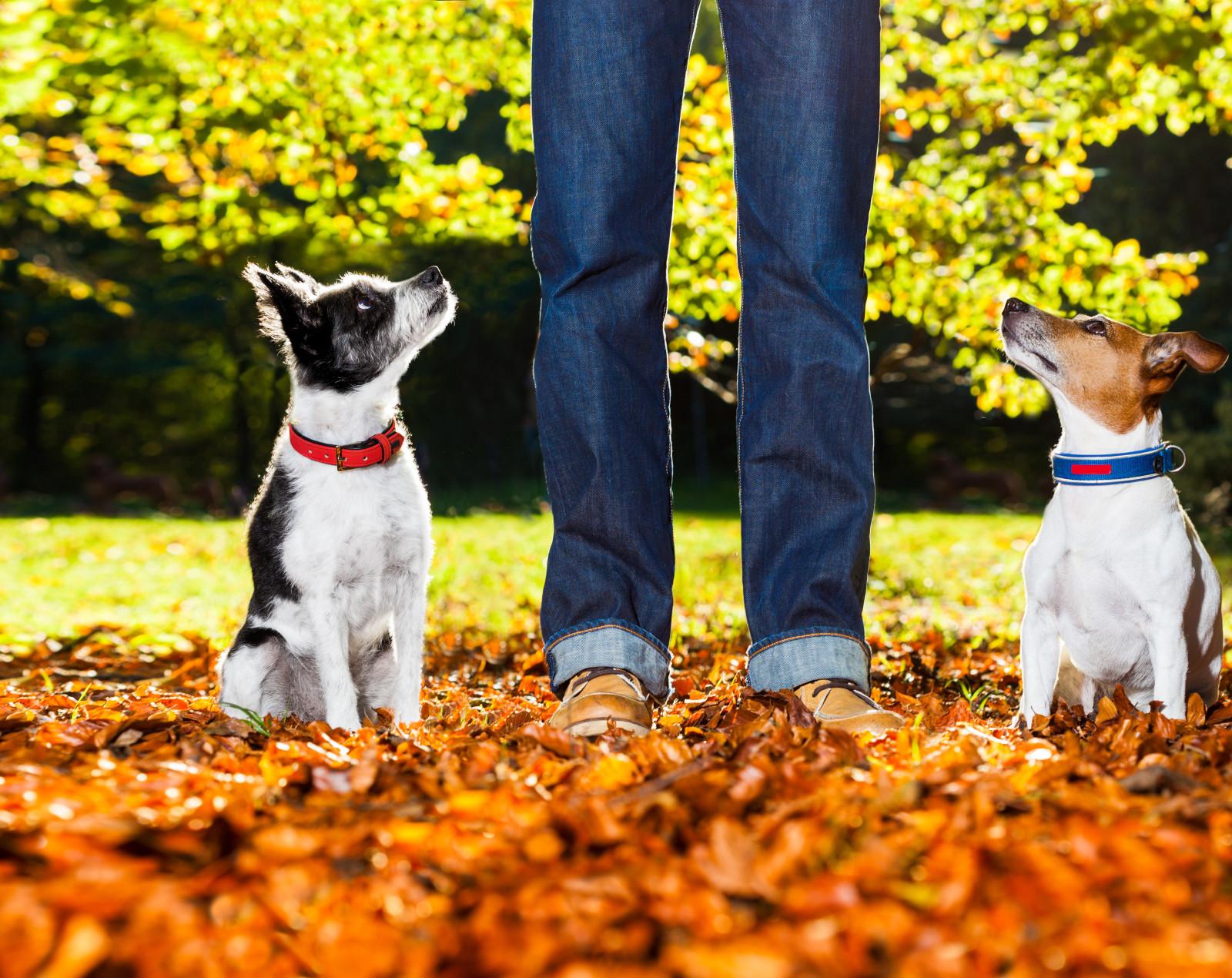 limitless dog training temecula san diego ca dog trainers