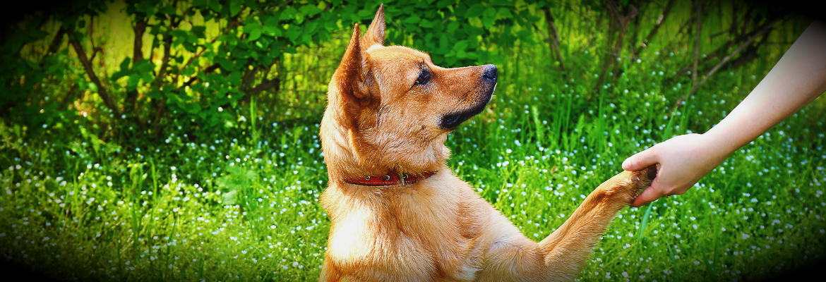 LimitLess San Marcos Dog Training - San Marcos Dog Trainers
