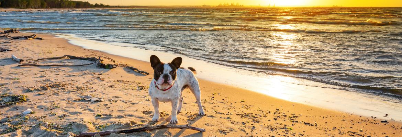 LimitLess Oceanside Dog Training - Oceanside Dog Trainers